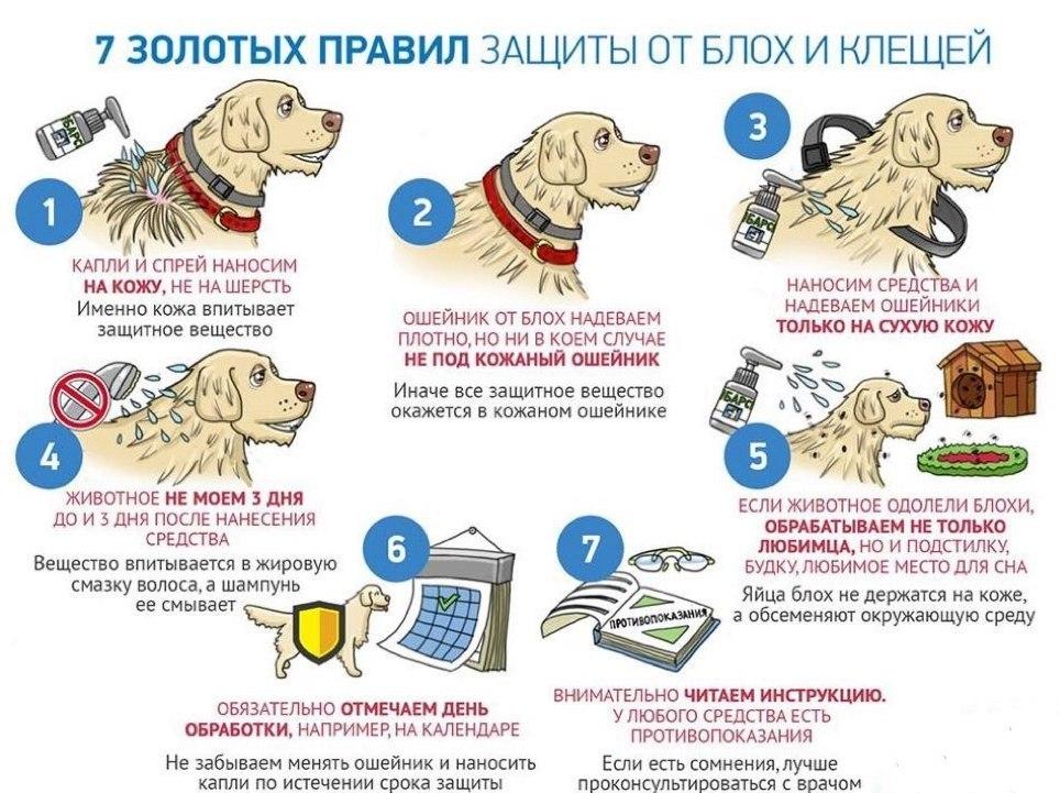 правила обработки собаки от блох и клещей