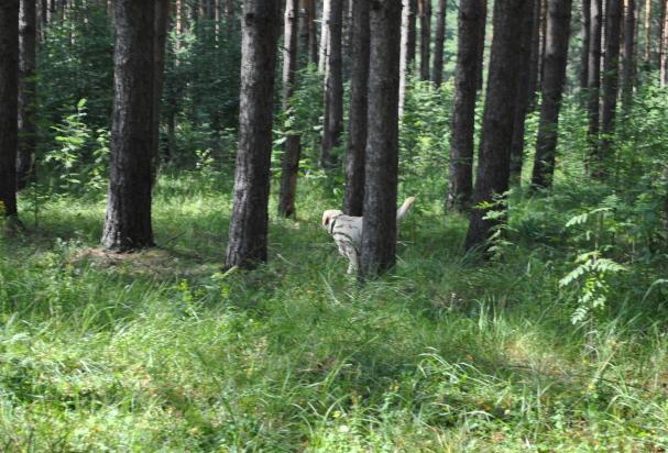 Кэролайн ищет в лесу человека