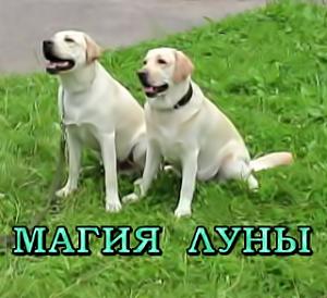 myhappypuppy.ru