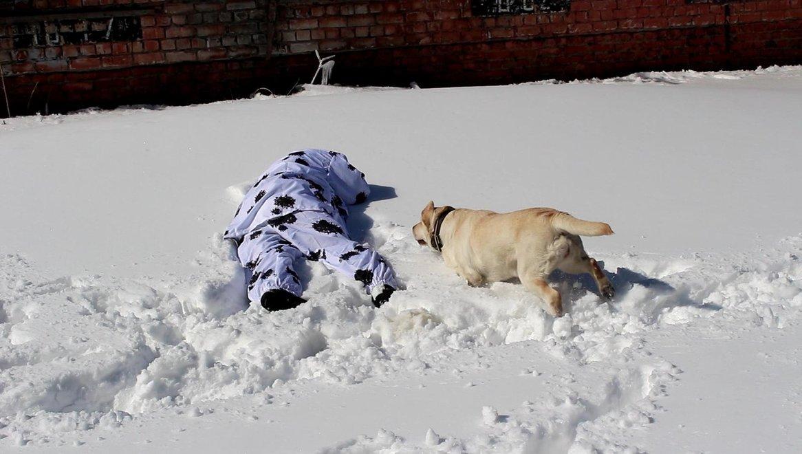 Кэролайн Адель Брукс нашла пострадавшего человека. На статисте одет специальный костюм, чтобы сливаться на фоне снега, для того чтобы собака искала человека по запаху, а не глазами.